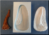 Individual Fossil Molds