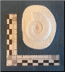 Ammonite Cast